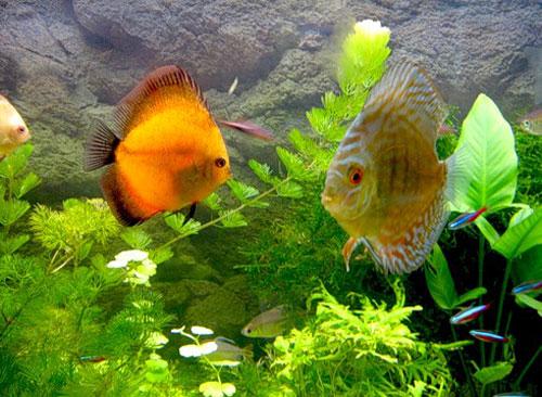 Аквариумные рыбки для начинающих. С фото и описанием