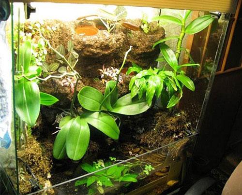 Аквариум для орхидей своими руками